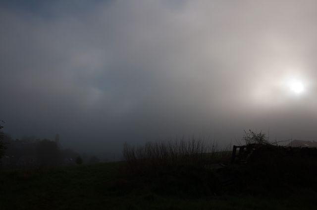 Fog (4)