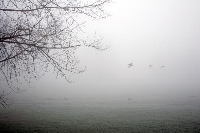 Foggy4